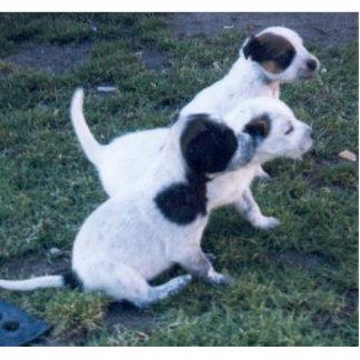 Pups Statuette