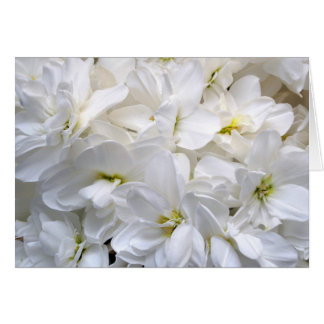 Pur White Flowers Card