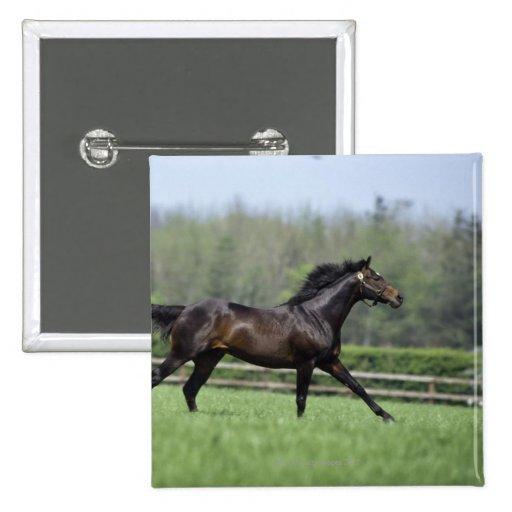 Pura sangre del caballo, Wassl 1988, Pin Cuadrada 5 Cm