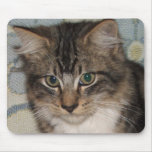 Purdy Kitten 1 Mouse Pad