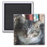 Purdy Kitten 3 Magnets