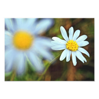 """""""Pure and Innocent Daisies"""" Photo Prints"""