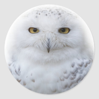 Pure as the Driven Snowy Owl Classic Round Sticker