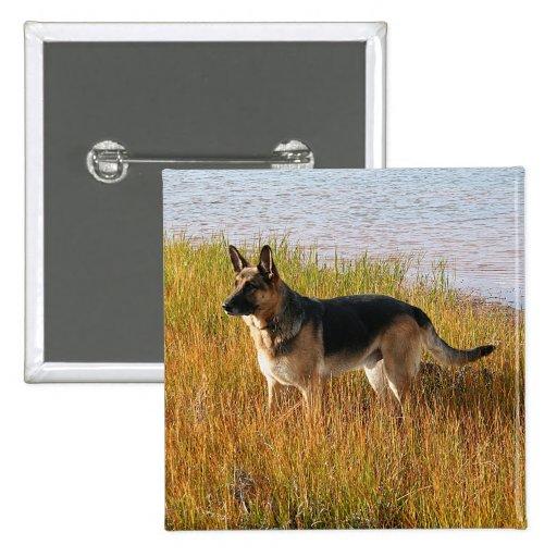 Pure Bred German Shepherd Photo on Button