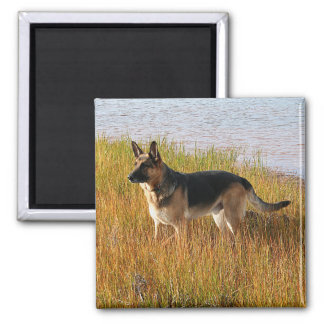 Pure Bred German Shepherd Photo on Magnet
