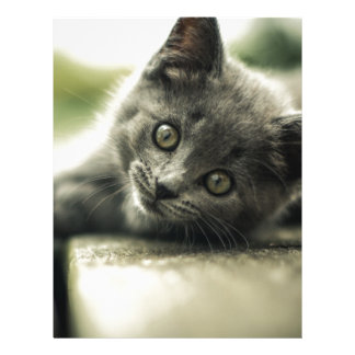 Pure Gray Kitten Letterhead