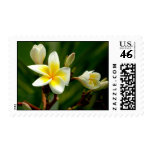 pure maldivian.... stamp