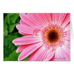 Pure Pink Greeting Card