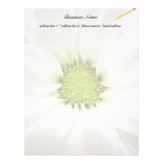 pure white daisy flower letterhead