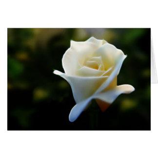 Pure White Rose Card
