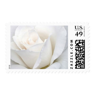 Pure White Rose Postage