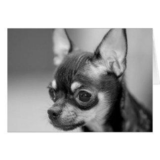 Purebred Chiwawa Puppy Card