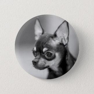Purebred Chiwawa Puppy Pinback Button