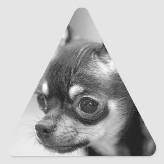 Purebred Chiwawa Puppy Triangle Sticker