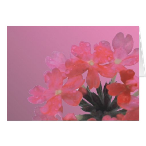 Purely Pink Greeting Card