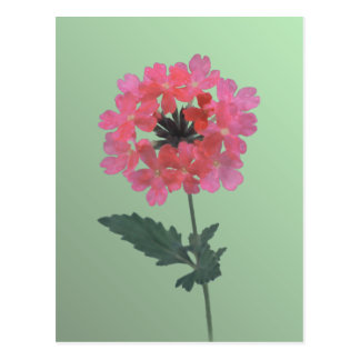 Purely Pink Postcard