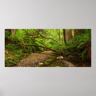 Purisima Creek Redwoods, California Poster