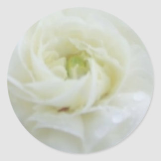 Purity White Roses Classic Round Sticker