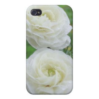 Purity White Roses iPhone 4 Covers