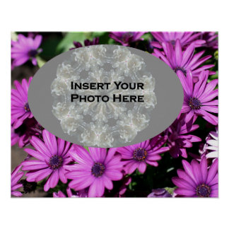 Purple African Daisies Photo Template Poster