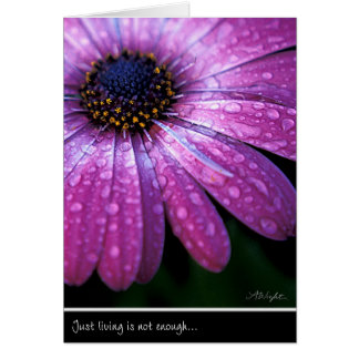 Purple African Daisy, by Anna Wight Greeting Card