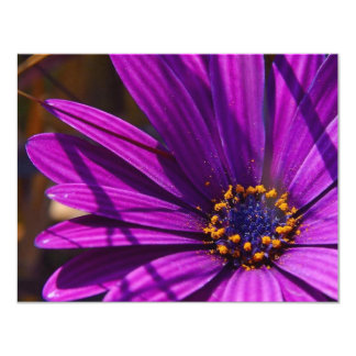 Purple African Daisy Close Up Card