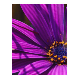 Purple African Daisy Close Up Flyer