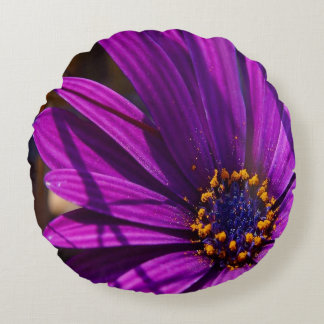Purple African Daisy Close Up Round Pillow