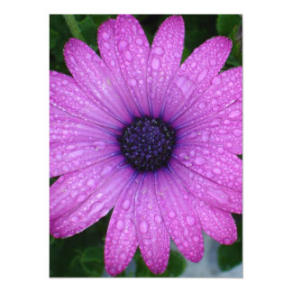 Purple African Daisy with Raindrops Card