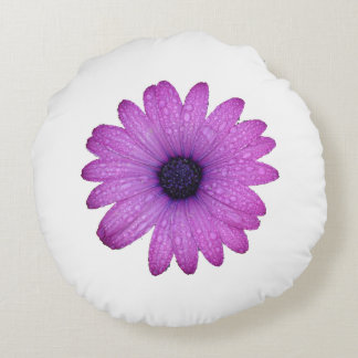 Purple African Daisy with Raindrops Isolated Round Pillow