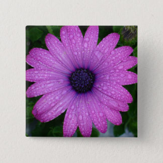 Purple African Daisy with Raindrops Pinback Button