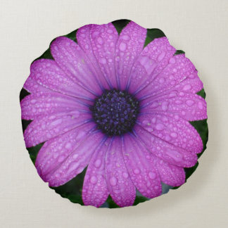 Purple African Daisy with Raindrops Round Pillow
