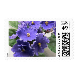 Purple African Violet Flowers Postage