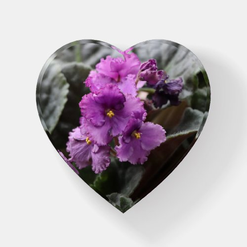 Purple African Violet Paperweight