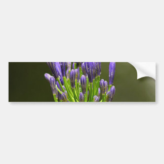 Purple Agapanthus Bumper Sticker