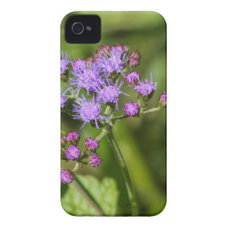 Purple Ageratum Wildflowers iPhone 4 Cover