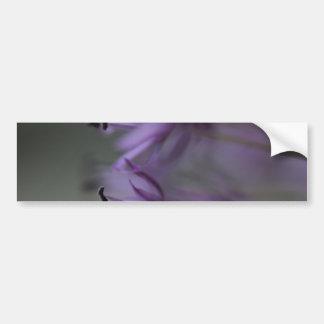 Purple Allium Bumper Stickers