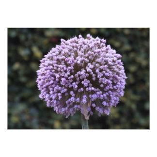 Purple Allium Flower Invitation Custom Invites