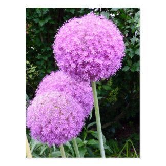 Purple Allium Flower Post Card