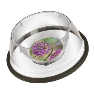Purple Allium Flowers Pet Bowl