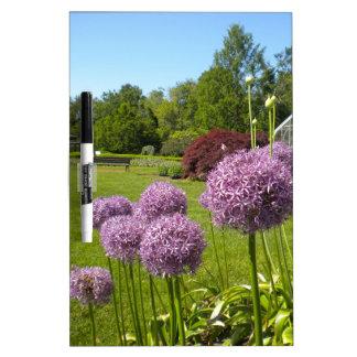 Purple Allium Giganteum Garden Dry Erase Board