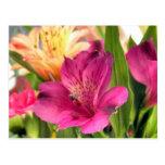 Purple Alstroemeria Flower Lilies Flowers Photo Postcard