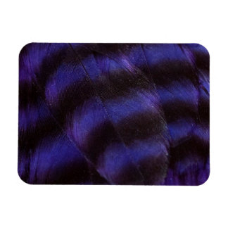 Purple and Black Feathers Magnet