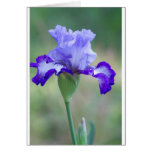 Purple and Blue Tall Bearded Iris Bloom Card