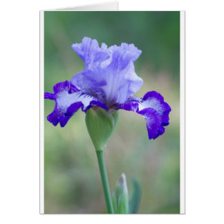 Purple and Blue Tall Bearded Iris Bloom Card