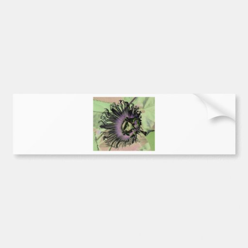Purple and Green Passion Flower Bloom Bumper Sticker