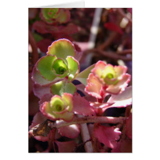 Purple and Green Succulent Plant Greeting Card