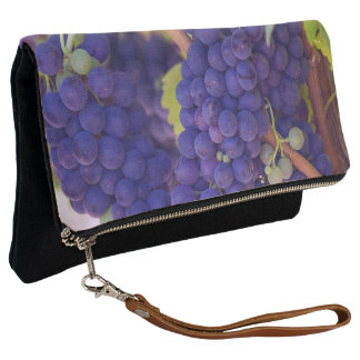 Purple and Green Wine Grapes on the Vine Clutch