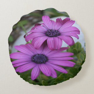 Purple and Pink African Daisy Flowers Round Pillow