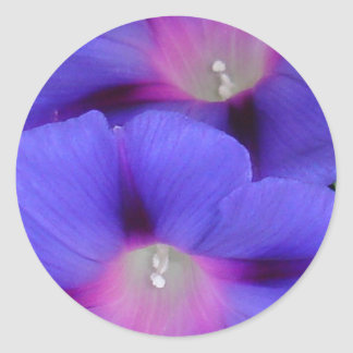 Purple and Pink Colored Morning Glory Flowers Clos Classic Round Sticker